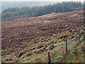 NG4235 : Coniferous plantings above Tungadale by Trevor Littlewood