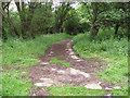 TG1600 : Footpath through Bush Close by Evelyn Simak