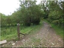 SX6397 : Farm track used by the Devonshire Heartland Way by David Smith