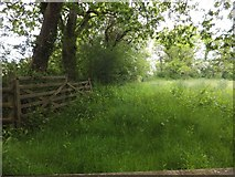 SX6597 : Field and old gate near Taw Green by David Smith