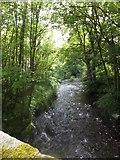 SX6596 : River Taw at Taw Green by David Smith