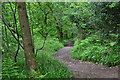 SS9128 : West Somerset : Woodland Path by Lewis Clarke