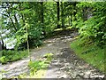 NY3701 : Windermere Shore Path at Wray Castle by David Dixon