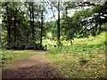 NY3700 : Path Towards Wray Castle by David Dixon