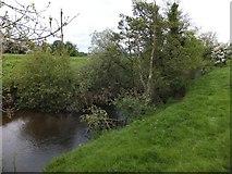 SS6501 : Fallen tree in River Taw, The Hams, North Tawton by David Smith