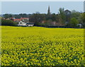 TF0712 : View across the oil seed rape to Braceborough by Mat Fascione