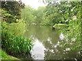 TQ5387 : The lake in Langtons House gardens by Derek Voller