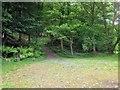 SD3787 : Path into Great Knott Wood by David Dixon