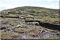 G5888 : Bog Wood by Anne Burgess
