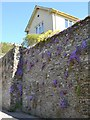 SX8255 : Purple flowers on a retaining wall, Abbey Road, Cornworthy by Robin Stott