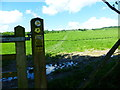 SU6021 : Stretch of the South Downs Way between Exton and Beacon Hill by Shazz