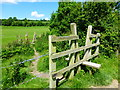 SU6021 : Stiles on the South Downs Way by Shazz