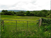 G9424 : Gate, Cavan by Kenneth  Allen