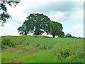 SP9507 : Field and trees by Robin Webster