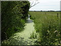 TL3768 : A green ditch by Keith Edkins