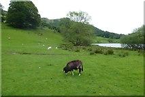 NY3404 : Herdwick near Loughrigg Tarn by DS Pugh