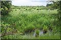 TL3569 : Rough grazing on the fens by Bill Boaden