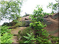 SJ2484 : Cliff face, Thurstaston Hill by Oliver Dixon