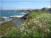 NT6779 : Coastal East Lothian : Early Summer In Sunny Dunny by Richard West