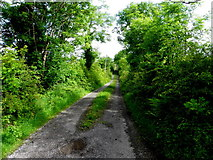 G9226 : Road at Corcormick by Kenneth  Allen