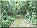 TQ3963 : Footpath through Rushfield Shaw by Marathon