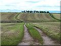 NY5620 : Newly mown fields near Thrimby by Oliver Dixon
