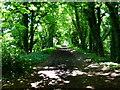 SU6221 : Woodland walk on dismantled railway by Shazz