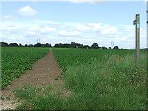 TM3656 : Footpath by Keith Evans