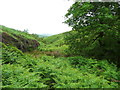 SE0908 : Oak tree, Magdalen Clough / Rams Clough by Humphrey Bolton