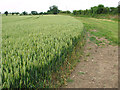 TG0205 : Wheat crop beside the path to Reymerston by Evelyn Simak