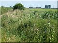TL5690 : Willow Row Drove by Richard Humphrey