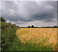 TG1527 : Rain clouds above ripening barley by Evelyn Simak