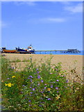 TR3752 : The beach at Deal by pam fray