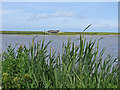TF7544 : Parrinder Hide viewed from Island Hide by Pauline E