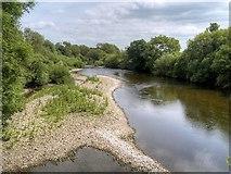 SE2996 : River Swale at Great Langton by David Dixon