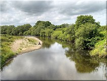 SE2996 : River Swale, Upstream from Great Langton by David Dixon
