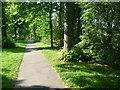 TQ0207 : Avenue of trees along Mill Road by Marathon