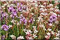 NR6654 : Wild Flowers, Isle of Gigha by Stuart Wilding