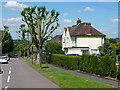 TL2026 : Council houses and pruned tree, East View by Humphrey Bolton