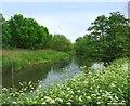 SU7670 : River Loddon, Lower Earley by Des Blenkinsopp
