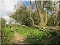 ST4702 : Path up Buckham Down by Derek Harper