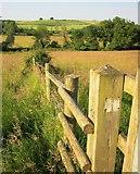 SU1126 : Fence across meadow near Homington by Derek Harper