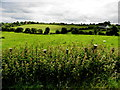 H3772 : Nettles, Coolkeeragh by Kenneth  Allen