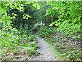 SP8801 : Woodland Path Angling Spring Wood by Nigel Mykura