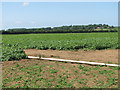 TG0040 : Irrigation pipe in potato crop field by Evelyn Simak