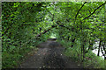 NS8593 : Path through the woodland on the riverbank by Doug Lee