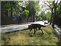 TQ3276 : Wolf sculpture, junction of Grove Lane and Champion Park, Camberwell by Robin Stott