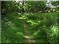 SU8179 : Permissive path, Knowl Hill by Alan Hunt