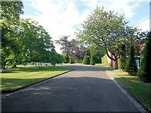 TQ4312 : Topiary at Ringmer Park by Paul Gillett