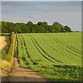 SK6365 : Robin Hood Way south of Edwinstowe by David Lally